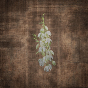 Terra Incognita: Live from the Ojito Wilderness
